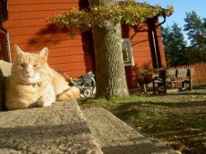 Sunnanvindens förskola åkersberga och vår katt